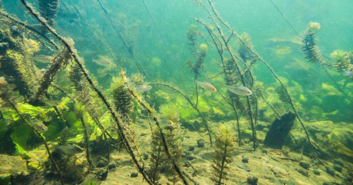 Where Do Fish Go in Winter   Hibernating Fish